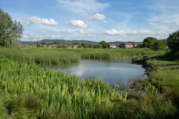 Protected species: Natural England publishes updated standing advice to local planning authorities and new guidance for developers