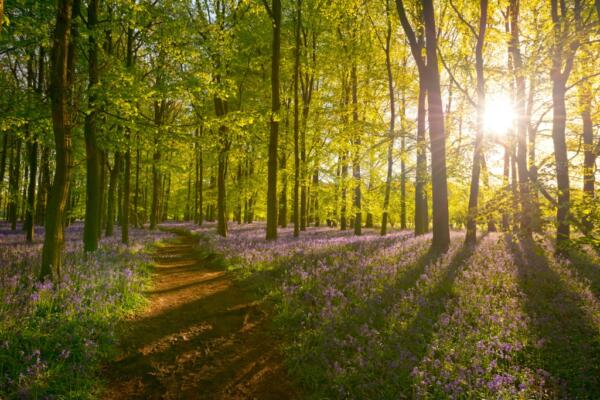 Environment Bill: Lords' Amendments On Habitats Regulation And Ancient Woodland Passed